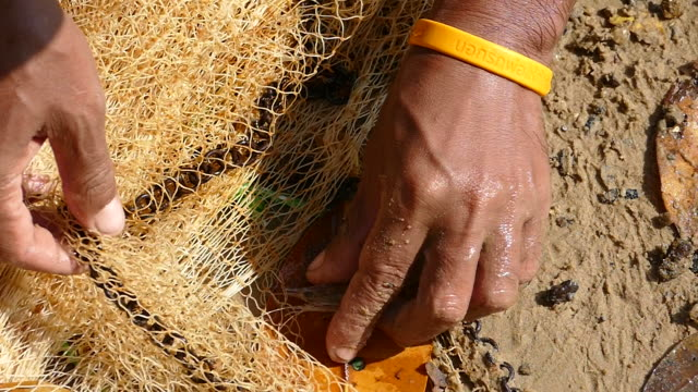 Asian Thai fishermen catching shrimp in fishing net