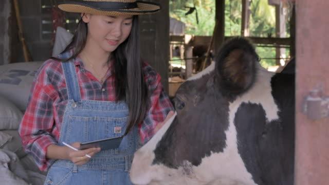 vidéos et rushes de fermier asiatique de femme utilisant la tablette numérique dans le bétail. propriétaire d'une petite entreprise réussit dans le produit laitier - vache laitière