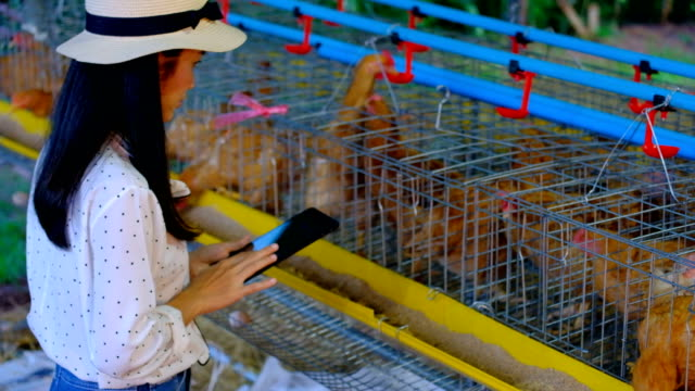 Asian Woman Farmer With A Digital Tablet In Chickens farm, Smart agriculture and technology concept video