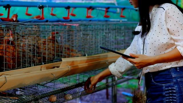 vídeos de stock, filmes e b-roll de fazenda de asiáticos mulher agricultor com a digital tablet em galinhas, conceito de agricultura e tecnologia inteligente - ave doméstica