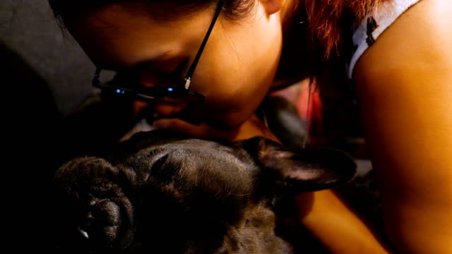 Asian Woman finding a tick on a French Bulldog. video