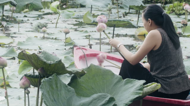 Asian woman rowing a small boat in a lotus pond, picking lotus petals, folding lotus petal.Concept of relaxation in nature environment.
