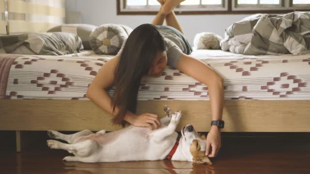 asiatisk kvinna kliar jack russell terrier mage i sovrummet - djurhuvud bildbanksvideor och videomaterial från bakom kulisserna