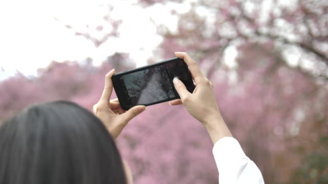 Asian Woman taking pictures of Cherry blossom flower