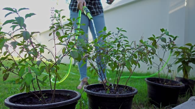 asiatische frau baum gemüse topf gießen. - wassersparen stock-videos und b-roll-filmmaterial