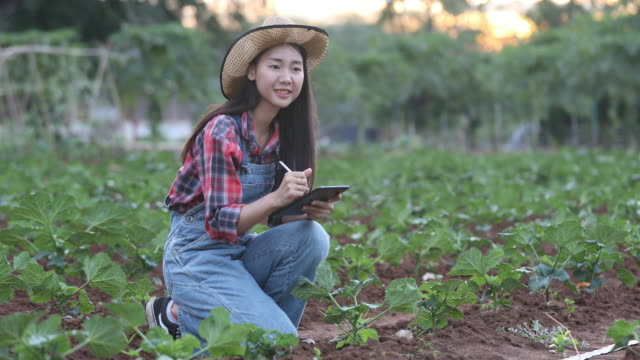 Asian women Agronomist and farmer Using Technology for inspecting in Agricultural and organic vegetable Field video