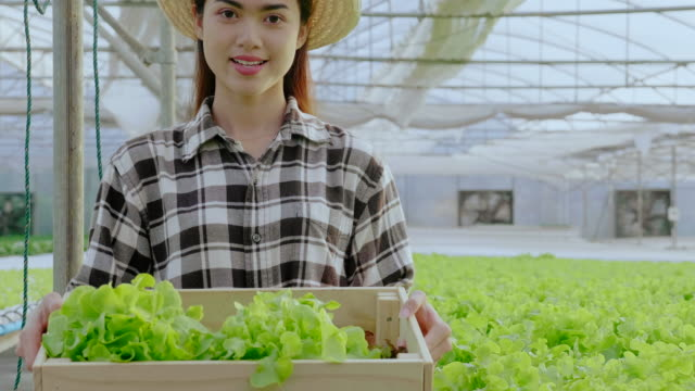 Asian women are farmers. Stand in quality vegetable greenhouses without pesticides. Show quality vegetables that are grown by organic vegetables as standard. Concept Quality food