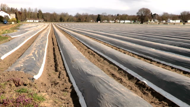 Asparagus field rows in spring video