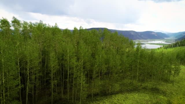 vídeos de stock, filmes e b-roll de floresta de aspen crescendo nas montanhas rochosas selvagens do colorado - aspen colorado