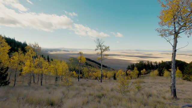 vídeos de stock, filmes e b-roll de aspen árvores transformando cores no outono - aspen colorado