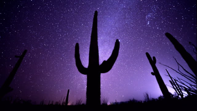 astro time lapse of a saguaro cactus in the sonoran desert of arizona