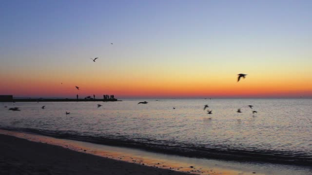 At dawn, seagulls fly over the sea At dawn, seagulls fly over the sea seagull stock videos & royalty-free footage