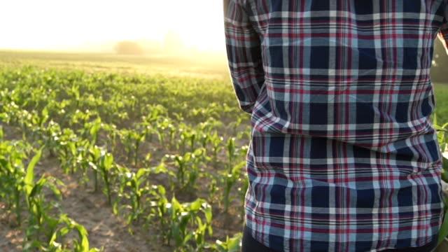 Al atardecer el agricultor camina el campo cargando una caja con plantas verdes. - vídeo