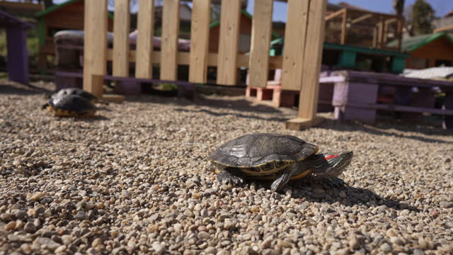 At the animal rescue center association, turtle exploring the sunny day