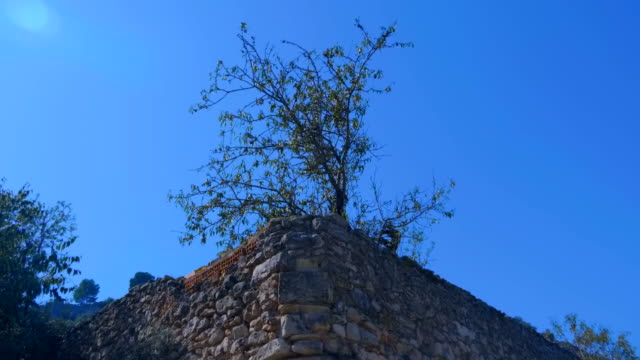vídeos de stock e filmes b-roll de at the corner of an ancient stone wall of a tourist attraction a tree grows - ivy building