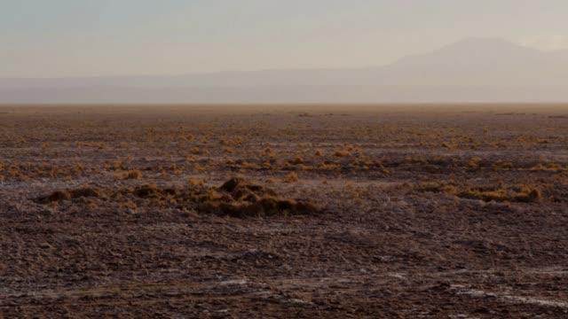 atacama desert - дикая местность стоковые видео и кадры b-roll