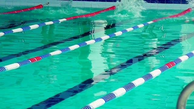 vídeos de stock e filmes b-roll de athletes swimmers swim in the pool. - campeão desportivo