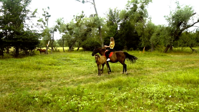 athletic girl rides a horse next to the colt on the grass video