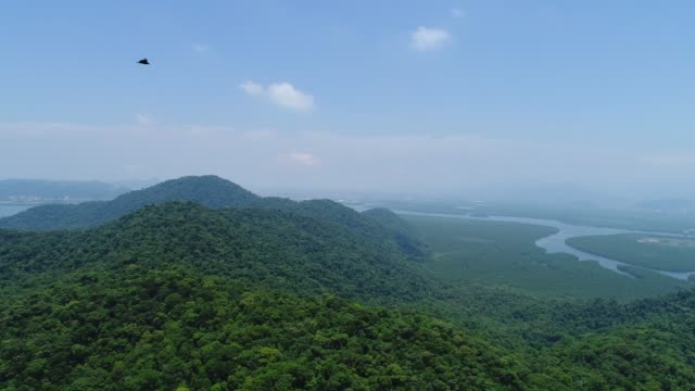 Atlantic Forest in Brazil Drone Footage amazon stock videos & royalty-free footage