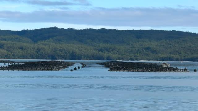 atlantic salmon pens in macquarie harbour, tasmania video