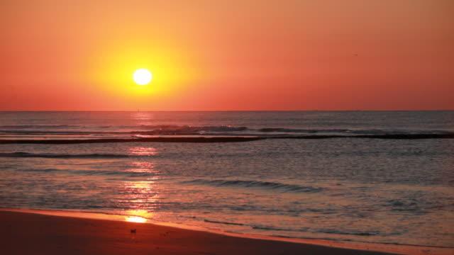 Atlantic Sunrise  seagull stock videos & royalty-free footage