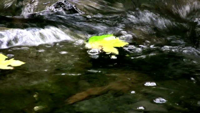 vídeos de stock, filmes e b-roll de flutuando atmn de fluxo - flutuando na água