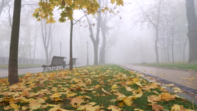Atmospheric autumn misty morning in park. Lifting above yellow foliage between two bricked walkways. UHD