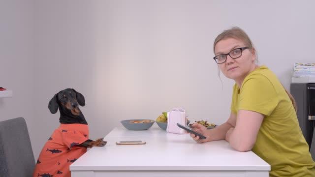 attraktive blonde mädchen mit brille und lustige dackel hund sitzen am tisch gegenüber und verwenden smartphones. psychologische probleme mit digitaler sucht. - achtlos stock-videos und b-roll-filmmaterial