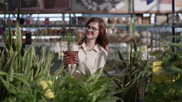 attractive female buyer in glasses for sight chooses a decorative flower in pots for home or office decor, background of green plants in a greenhouse for a gardener - direttrice video stock e b–roll