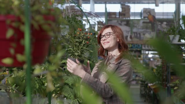 attractive female employee florist examines condition of home ornamental plants in pots on shelves of flower shop, beautiful woman chooses an original flower for home or office in gardeners - direttrice video stock e b–roll