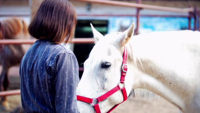 Attractive girl strokes a white horse in the corral Attractive girl strokes a white horse in the corral, close up corral stock videos & royalty-free footage