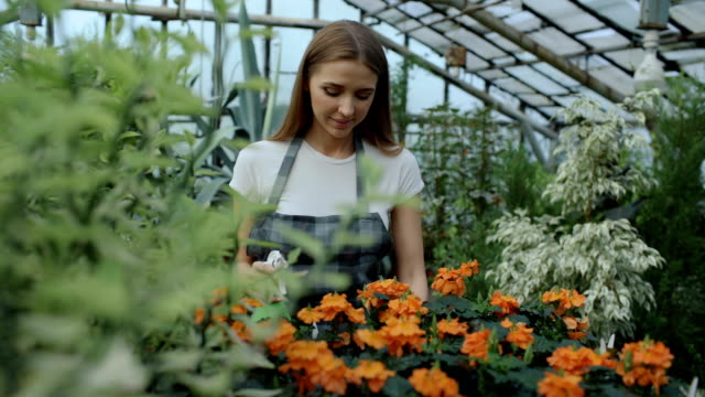 33ab8d65a754f Attractive Smiling Woman Gardener In Apron Watering Plants And Flowers With  Garden Sprayer In Greenhouse Stock Video   More Clips of 20-29 Years