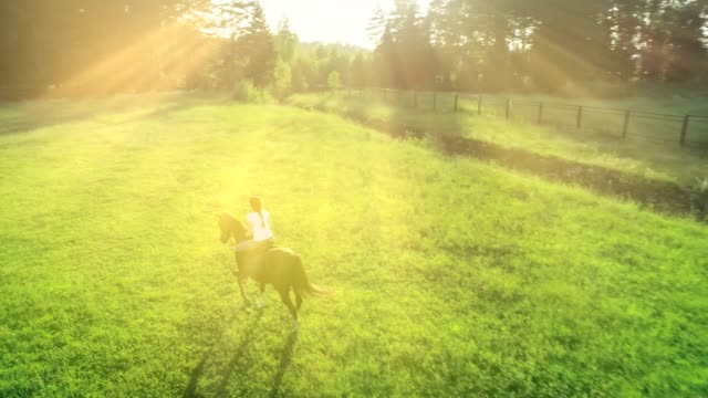 attractive woman riding trotting on a brown horse on a meadow at a summer day. slow motion - sella video stock e b–roll