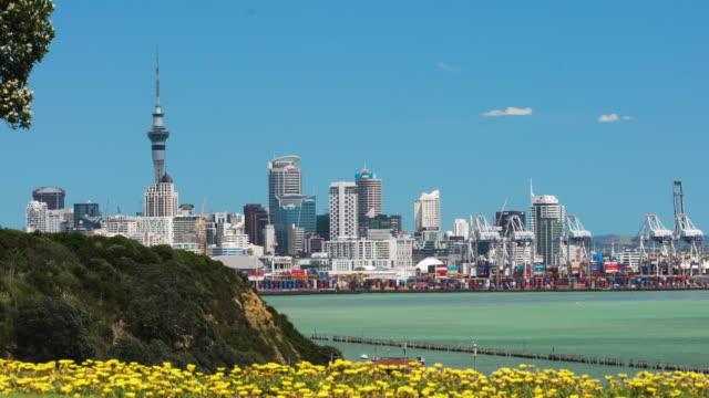 Auckland City through flowers. video