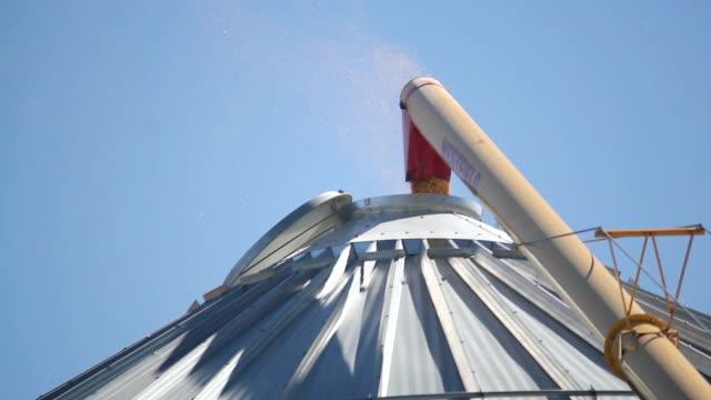 auger transferring harvest corn to bin - spannmålsväxt bildbanksvideor och videomaterial från bakom kulisserna