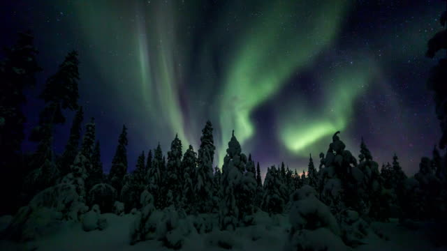 Aurora Borealis (Northern lights) above a snowy forest in lappland