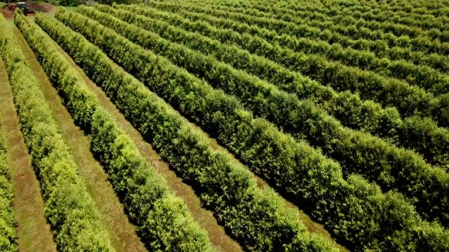 australiska grödor i linje formationer. flygfoto - fruktträdgård bildbanksvideor och videomaterial från bakom kulisserna