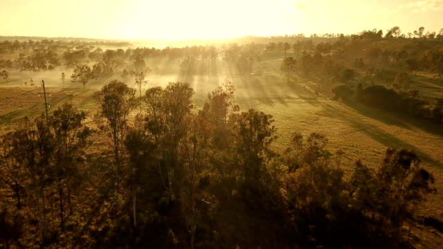 Australian sunset above savannah video