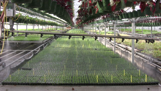 Automated boom waterer in a greenhouse video