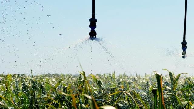 automatiserade bevattningssystem på fältet. vatten bevattning - gröda bildbanksvideor och videomaterial från bakom kulisserna