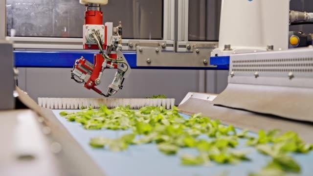 vídeos de stock, filmes e b-roll de processo automatizado de plantio usando robô avançado para plantio de folhas em bandejas - exatidão