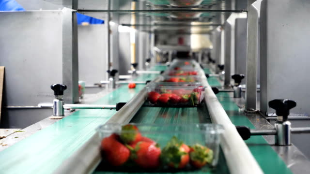 vídeos de stock e filmes b-roll de automated production line for package strawberries fruit in plastic containers. - packaging