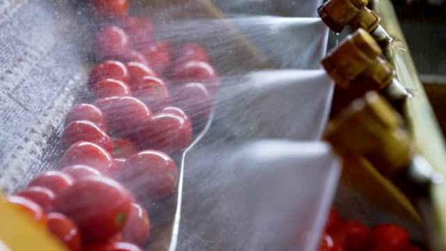 Automatic Line for Processing and Canning Vegetables . Preserving Tomatoes 12 video