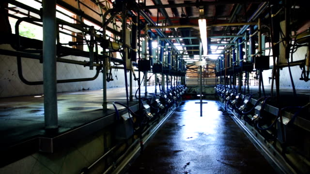 automatic milking cluster in milking parlour video