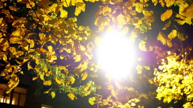 Autum leaf park night video