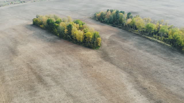 Autumn agriculture field and trees. video