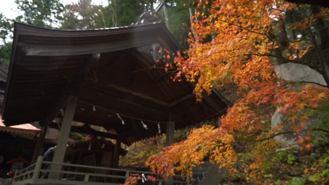 Autumn at Japan, Maple is change the color to seasonal at november and leaf lighted up by sunshine in the garden. video
