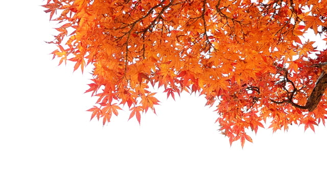 Autumn Background Isolated On White video