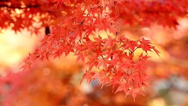 Herbst Hintergrund – Video