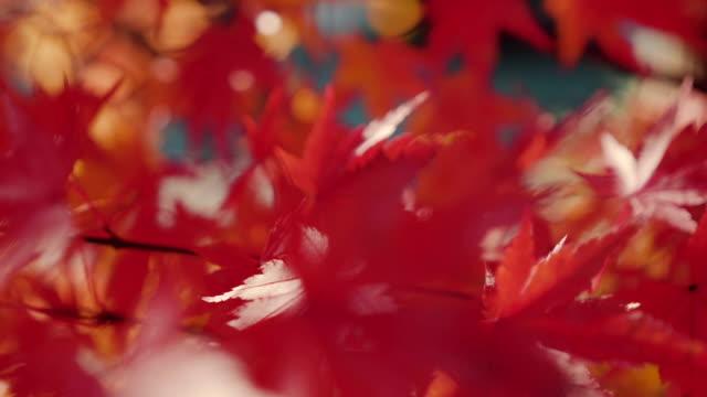 Autumn Background video